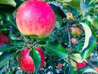 真田りんご園