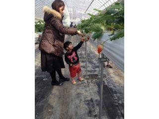水谷農園 翔ちゃんいちご園
