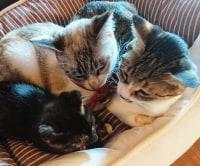 ねこカフェ・ハンドメイド雑貨 Five Cats