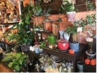 Green&FlowerStudio Li-an
