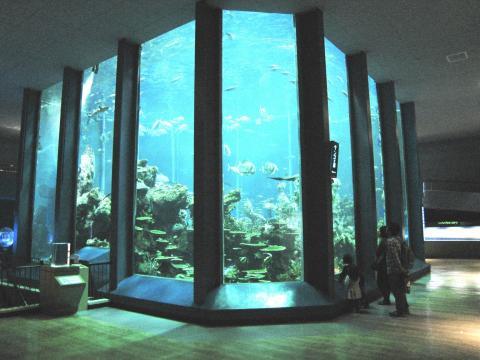 東海大学海洋学部博物館