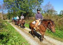 ひるがのホープロッジ / ひるがの高原木曽馬牧場