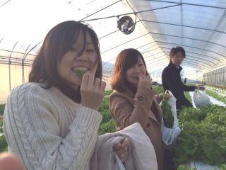 てしお夢ふぁーむ 桑名木曽岬農場