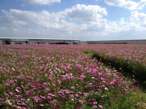 季節体験農場 花の海