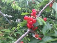 小野フルーツ園