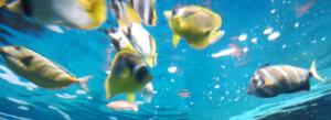 【割引有】雨の日のお出かけにオススメ都内近郊の水族館