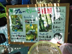 神奈川のブルーベリー狩りは広石農園。予約不要で口コミ好評判の理由