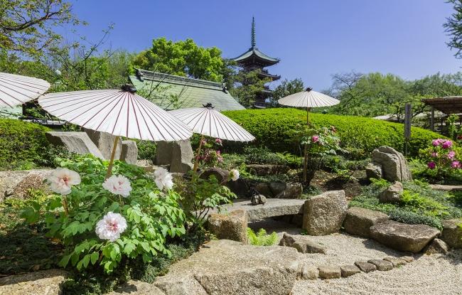 上野東照宮で春のぼたん祭が開催、見ごろと混雑予想