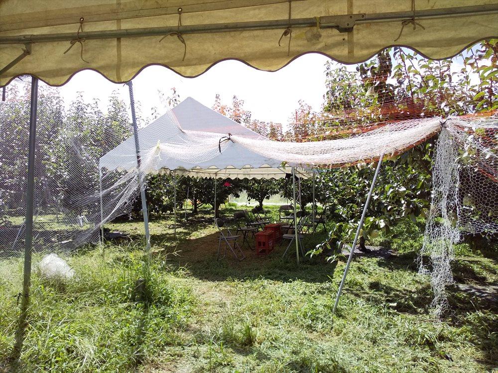 中込農園で梨狩り:椅子が用意