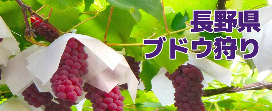 長野県_ブドウ狩り