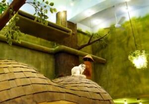 東京都内で動物を愛でながらお茶を楽しむ…変わり種ふれあいカフェ特集