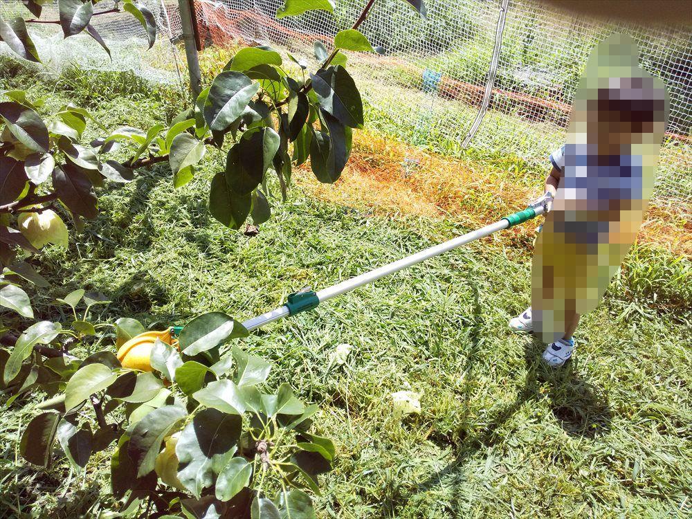 中込農園で梨狩り:高い所のナシを取る器具
