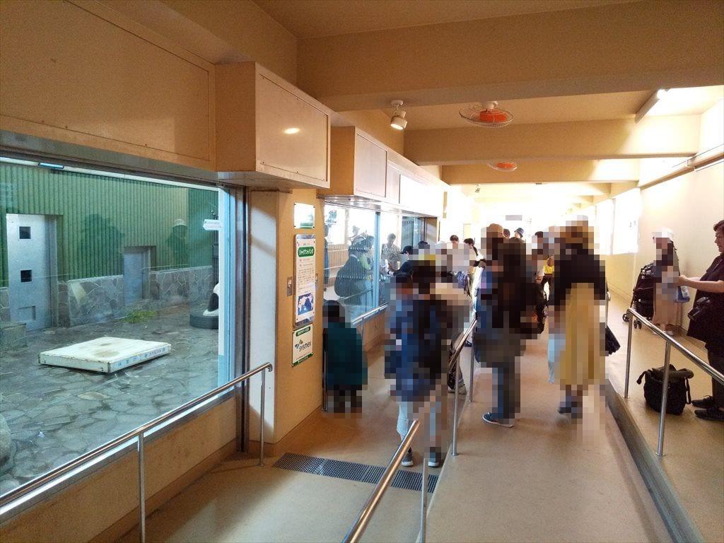 神戸王子動物公園パンダ